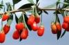 Купить ягоды годжи в Краснодаре: побочные эффекты