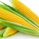 Калорийность кукурузного крахмала и использование его при диете
