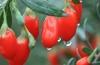 Купить ягоды годжи в Донецке: уникальное сочетание микроэлементов