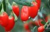 Где можно купить ягоды годжи в Челябинске: снижение веса