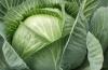 Какие витамины содержит сырая капуста: факты для худеющих