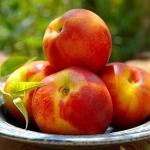 Как похудеть на фруктах: калорийность нектарина