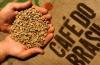 Насколько зеленый кофе с имбирем для похудения ускоряет эффект?