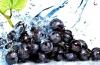 Кому нужна новая виноградная диета?