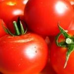 Диетический салат из помидоров с луком: просто и вкусно!