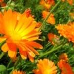 Лекарственные растения и похудение