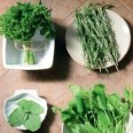 Травы для похудения, сборы трав для похудения. Рецепты травяных сборов для похудения и очищения