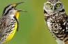 Диета для сов и жаворонков