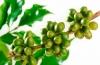 Противопоказания к зеленому кофе