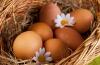 Похудеть помогут яйца