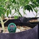 После того, как марихуана будет легализована, будет продаваться больше мороженого и печенья