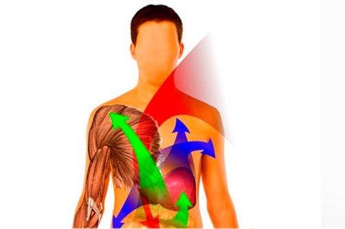 обмен веществ в организме человека фото