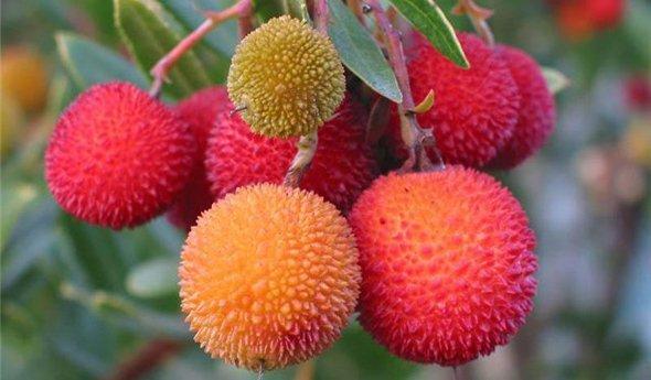 Экзотические фрукты во время диеты чем они полезны
